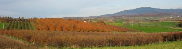 Blick übers herbstliche Markgräflerland nach Nordosten zum Hochblauen Ende November 2006