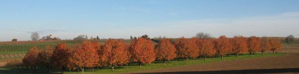 """Obstbäume im Markgraeflerland: Blick von """"Am Kreuzweg"""" zwischen Sulzburg und Buggingen nach Nordwesten zum Kirchlein Betberg am 16.11.2006 morgens"""