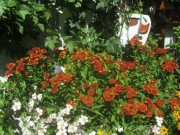 Blumen Sonnenhut (gelb) und Sonnenbraut (braun) und Maske am 8.8.2012