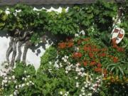Blumen Sonnenbraut und Maske am 8.8.2012