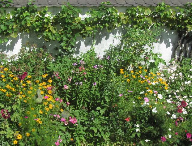 Blumen an der Gartenmauer am 8.8.2012