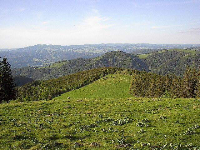 Sternwald freiburg wandern