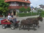 esel-kunzenhof160521