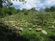 Schafe am Hirzberg 29.4.2012: Blick nach Nordosten