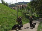 Schafe am Hirzberg 29.4.2012: Norbert Schwarz und Schaeferin auf dem Weg