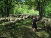 Schafe am Hirzberg 29.4.2012: Blick nach Norden