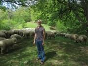 Schafe am Hirzberg 29.4.2012: