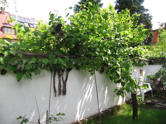 Gartenmauer am 4.6.2012