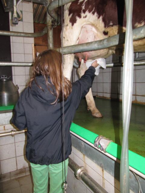 Küferhof am 21.4.2012: Im Melkstand
