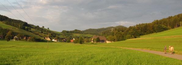Blick nach Osten ins Rechtenbach bei Stegen am 26.8.2009 in der Abendsonne