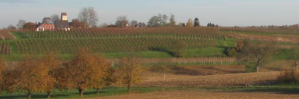 Blick nach Nordwesten zu Betberg zwischen Heitersheim und Müllheim im Markgraeflerland am 16.11.2006