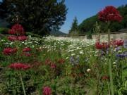 Garten an der Kirche FR-Ebnet am 27.5.2012: Blick nach Westen