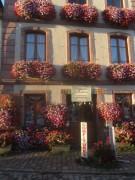 elsass3geranien-bergheim150920