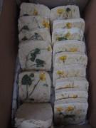 Ziegenmilch-Seife von Anita Kaier - 12.4.2012