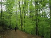 Streckereck am 1.5.2012: Buchen mit zartem Gruen