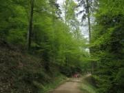 Streckereck am 1.5.2012: Buchenwald zum Rosskopf hin