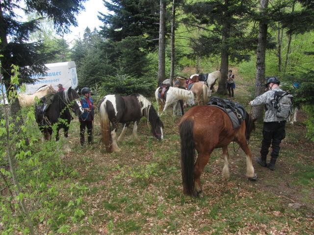 Streckereck am 1.5.2012: Pferdelager