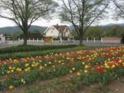tulpen2kappel-bahnhof130505