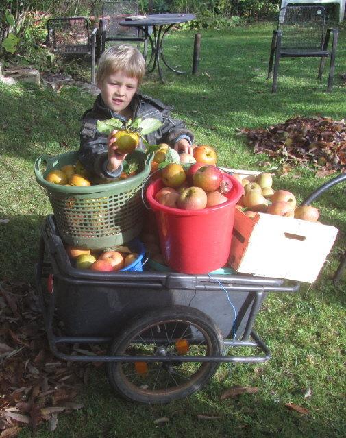 Apfelernte am 11.10.2012