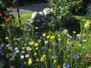 Blumen am 24.6.2012 - Blau und Gelb