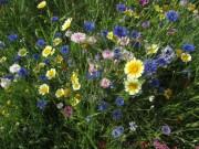 Blumen am 27.6.2012