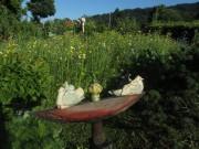 Blumen am 24.6.2012 - Keramik-Tauben