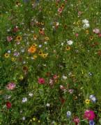 Blumenwiesen am 6.8.2012