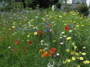 Blumenwiese am 21.6.2012