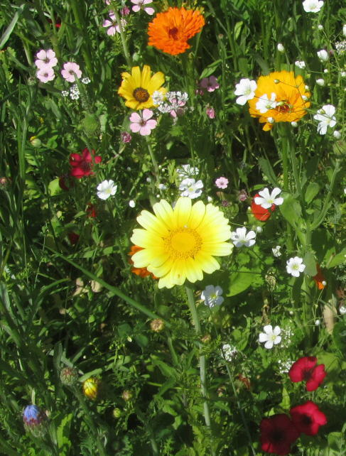 Blumenwiese am 17.6.2012