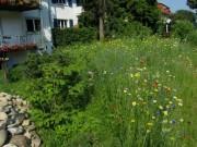 Blumenwiese am 17.6.2012 - noch wenige Blueten geoeffnet
