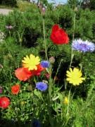 Blumen am 22.6.2012