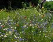 Blumenwiese am 29.6.2012