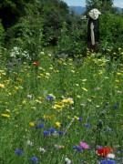 Blumenwiese am 21.6.2012 - Gregor schaut zu