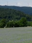Kornblumen am 7.6.2012: Blick nach Norden zu den Rosskopf-Windrädern