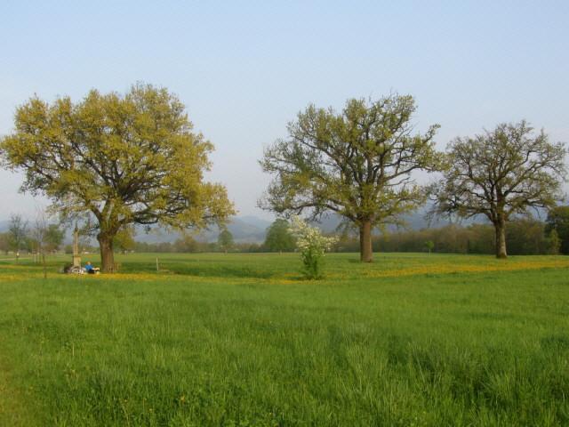 eichen1wanglerkreuz130505