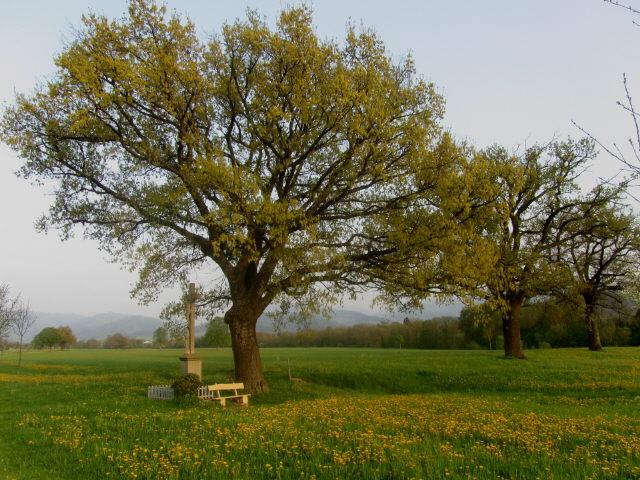 eichen4wanglerkreuz130505