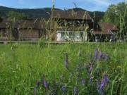 Wiesenblumen am 15.6.2012 - Blaue Wicken