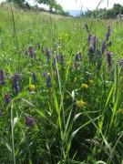 Wiesenblumen am 15.6.2012 - Blick nach Osten zum Schwarzwald