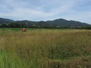 Kruettweg westlich von Zarten am 24.6.2012 - Wiese mit Blutstroepfchen