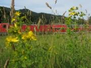 Wiesenblumen am 15.6.2012 - Zypressen-Wolfsmilch