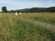 Kruettweg westlich von Zarten am 24.6.2012 - Wiese mit Joggern