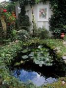 Aquarelle an der Gartenmauer 9.7.2012