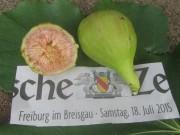 feige-freiburg150719