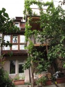 feige-rebe-balkon160812