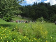 Kartaus 22.7.2012: Blick nach Osten zum Garten, der über dem frueheren Kreuzgang liegt