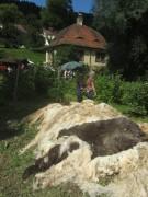 Kartaus Fest 22.7.2012: (51) Schwafwolle-Reste