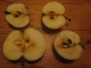Klaräpfel am 30.7.2012 - dunkle Kerne