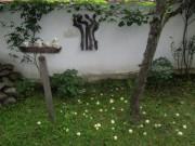 Klarapfelbaum am 31.7.2012 früh morgens