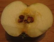 Klaräpfel am 30.7.2012 - reif, da dunkle Kerne
