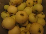 Klaräpfel am 30.7.2012 - groß und klein